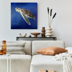 Canvas 24 x 24 - Beautiful sea turtle