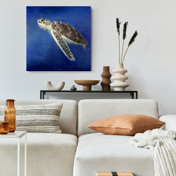 Canvas 24 x 24 - Beautiful sea turtle