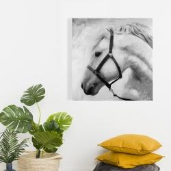 Canvas 24 x 24 - Darius the horse