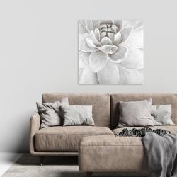 Canvas 24 x 24 - Delicate white chrysanthemum