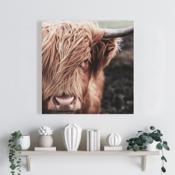 Canvas 24 x 24 - Desaturated highland cow