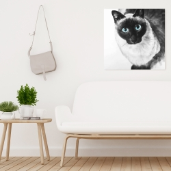 Canvas 24 x 24 - Blue eyes siamese cat