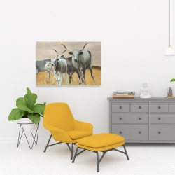 Canvas 24 x 36 - Nguni breeding
