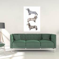 Canvas 24 x 36 - Small dachshund dog