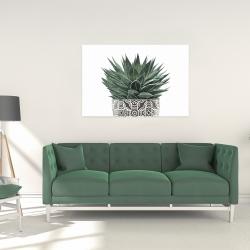 Canvas 24 x 36 - Zebra plant succulent