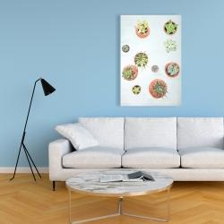 Canvas 24 x 36 - Cactus plants