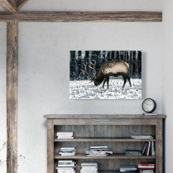 Canvas 24 x 36 - Caribou in the winter forest