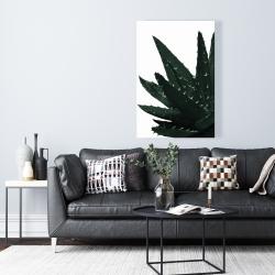 Canvas 24 x 36 - Aloe plant