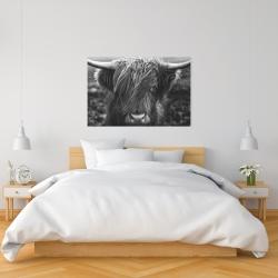 Canvas 24 x 36 - Monochrome portrait highland cow