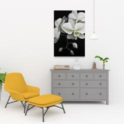 Canvas 24 x 36 - White orchids
