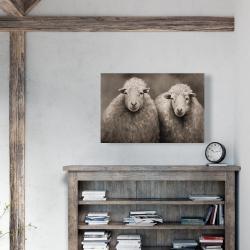 Canvas 24 x 36 - Sheep sepia