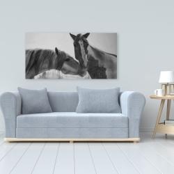 Canvas 24 x 48 - Horses lover