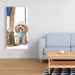 Canvas 24 x 48 - Fashionable cavoodle dog