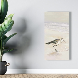 Canvas 24 x 48 - Semipalmated sandpiper on the beach