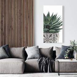 Canvas 24 x 48 - Zebra plant succulent
