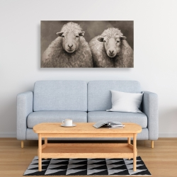 Canvas 24 x 48 - Sheep sepia