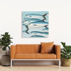 Canvas 36 x 36 - Small fish of caesio caerulaurea