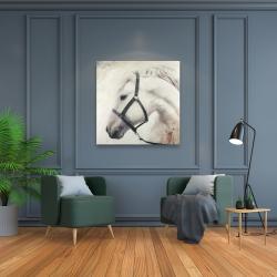 Toile 36 x 36 - Darius le cheval blanc