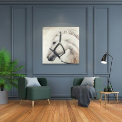 Canvas 36 x 36 - Darius the white horse