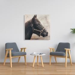 Toile 36 x 36 - Gallopin le cheval brun