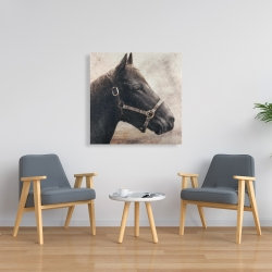 Canvas 36 x 36 - Gallopin the brown horse