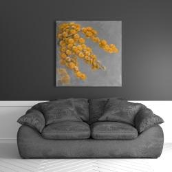 Canvas 36 x 36 - Golden wattle plant