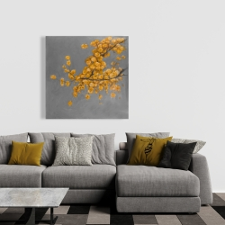 Canvas 36 x 36 - Golden wattle plant with pugg ball flowers