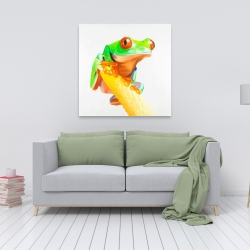 Canvas 36 x 36 - Curious red-eyed frog