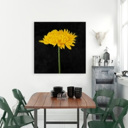 Canvas 36 x 36 - Chrysanthemum