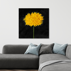 Canvas 36 x 36 - Yellow chrysanthemum