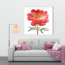 Canvas 36 x 36 - Pink peony