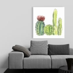 Canvas 36 x 36 - Four little cactus