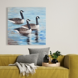 Canvas 36 x 36 - Canada geese in water