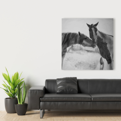 Canvas 36 x 36 - Horses lover