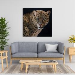 Canvas 36 x 36 - Realistic fierce leopard