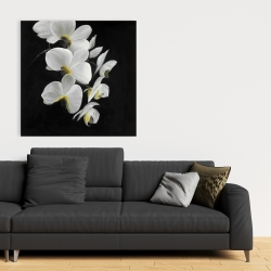 Canvas 36 x 36 - Beautiful orchids