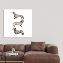 Canvas 36 x 36 - Small dachshund dog