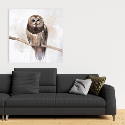 Canvas 36 x 36 - Barred owl