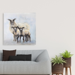 Canvas 36 x 36 - Sheep family
