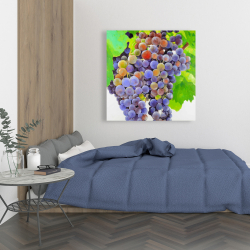 Canvas 36 x 36 - Bunch of grapes