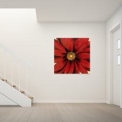 Canvas 36 x 36 - Red daisy