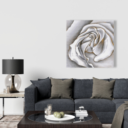 Canvas 36 x 36 - White rose delicate