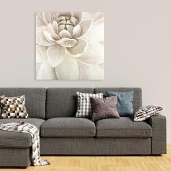 Canvas 36 x 36 - Delicate chrysanthemum
