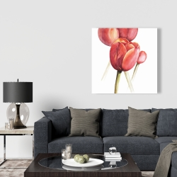 Canvas 36 x 36 - Blossoming tulips closeup
