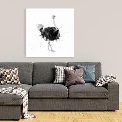 Canvas 36 x 36 - Proud ostrich