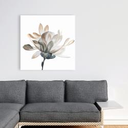 Canvas 36 x 36 - Softness
