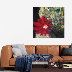 Canvas 36 x 36 - Echinopsis red cactus flower