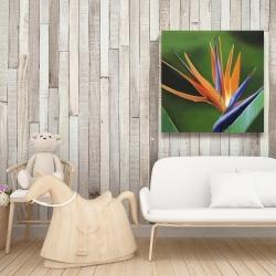 Canvas 36 x 36 - Bird of paradise flower