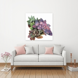 Canvas 36 x 36 - Succulent plant