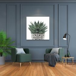 Canvas 36 x 36 - Zebra plant succulent